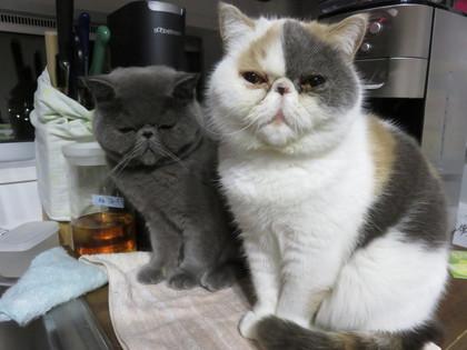 かぁさんの洗い物の手伝い