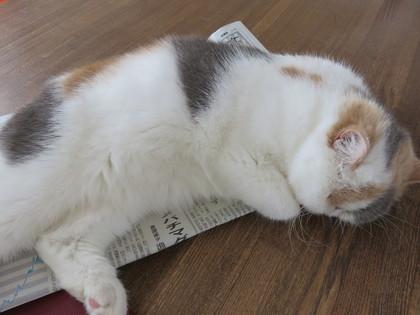 新聞の上で寝るって、、、