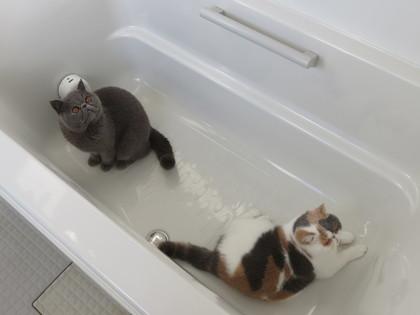 バスルーム好き