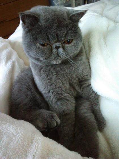 毛布に座るへいちゃん