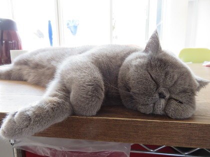 甘えん坊ちゃんなのでお昼ご飯食べてる横で寝てます