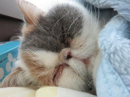 また寝た!