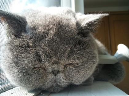 窓際で爆睡の顔!