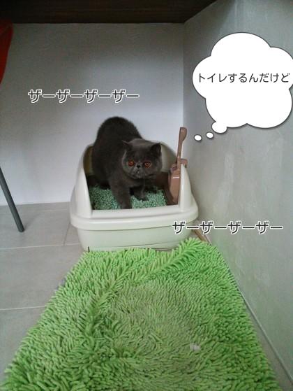 へいちゃんトイレしようかな~
