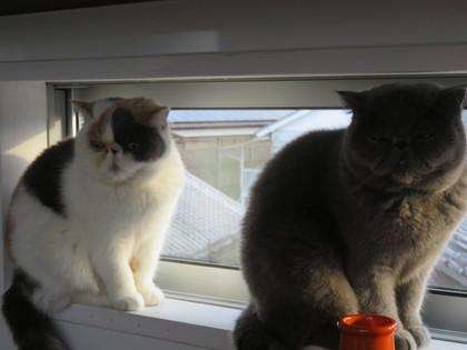 2にゃんで窓際。お外観察中
