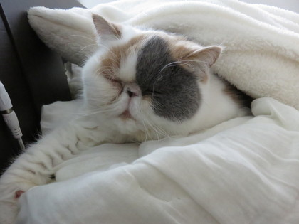 あずちゃんの寝顔
