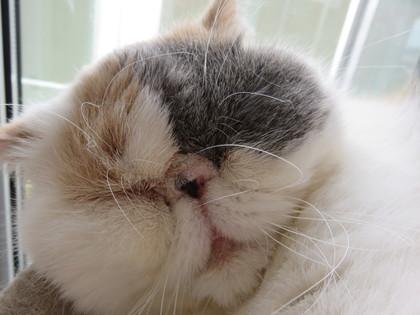 可愛い寝顔のあずきちゃん