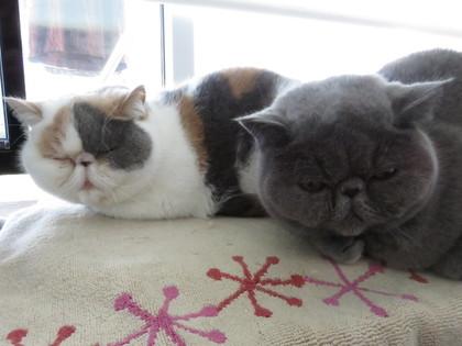 2匹仲良くカーペット
