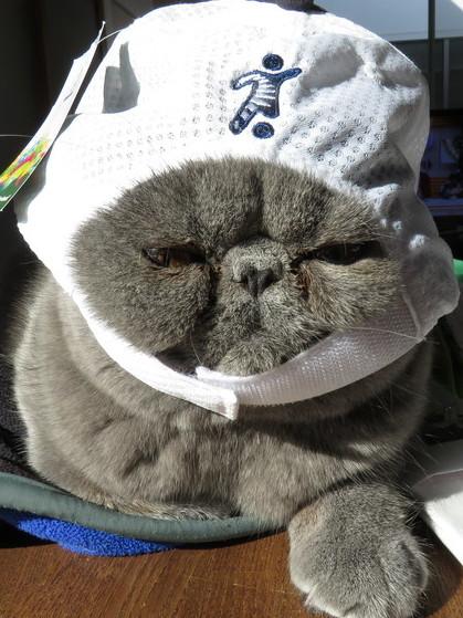 帽子かぶってみたけどちょっと違うんじゃない?
