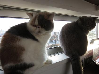 窓際2にゃん