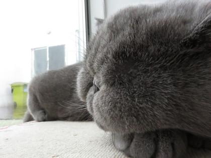 雨の音がうるさいけど寝られる平蔵君