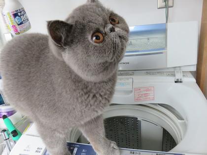 洗濯機に興味津々