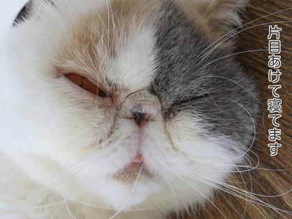 片目あけて寝てる!