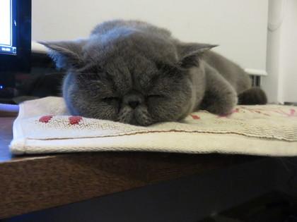 へいちゃんの寝顔