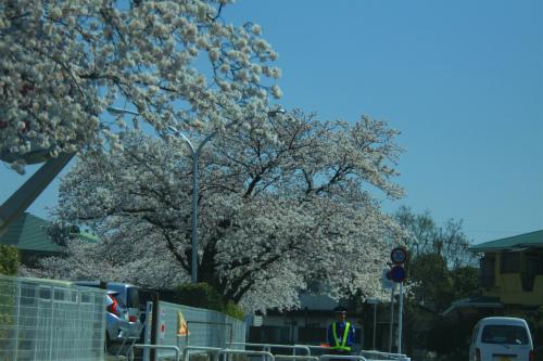 20150331_hakamairi_9_15.jpg