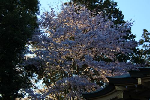 20150402_sakura_12.jpg