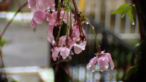 20150408_togakusishoumat_36.jpg
