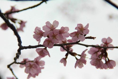 20150421_rokumankiyamata_089.jpg