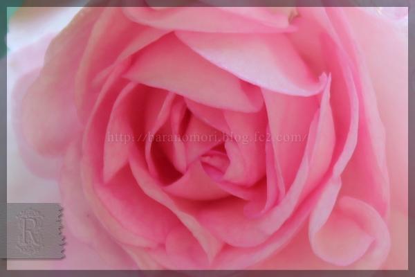 20150617 八重咲きインパチェンス 庭作業 メインガーデン 夏花壇