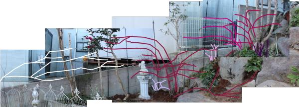 庭バラ ロックガーデン 20150112