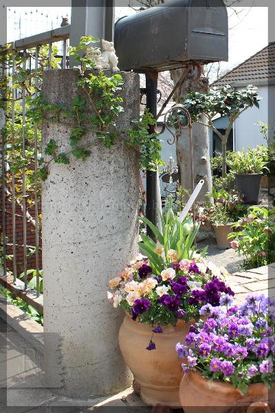 玄関 寄せ植え 門柱 シンデレラ 20150412