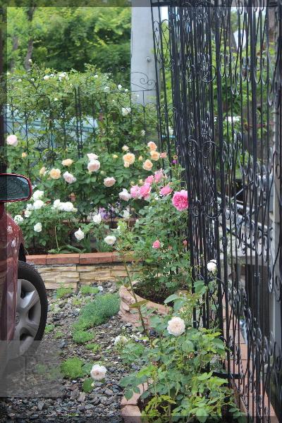 砕石駐車場花壇 20150516
