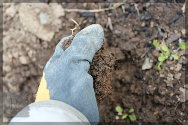 裏庭 土壌改良 粘土質の土を団粒化 20150129