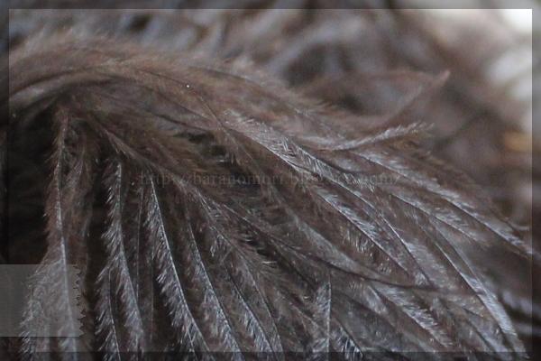 ダチョウの羽 PATA+ はたき 20150430
