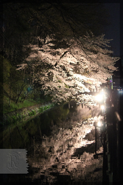 夜桜 花見 20150403