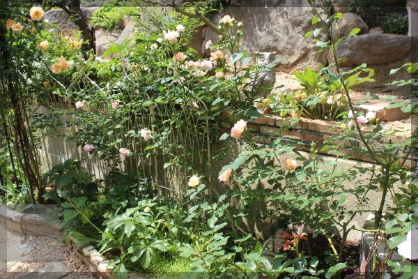 擁壁下 花壇 ペッシュボンボン フェリシア 20150520