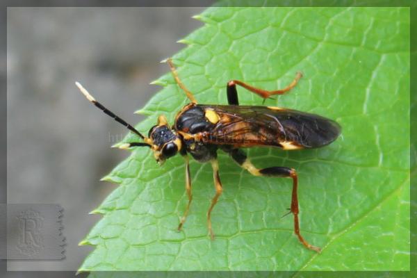 昆虫 20150508