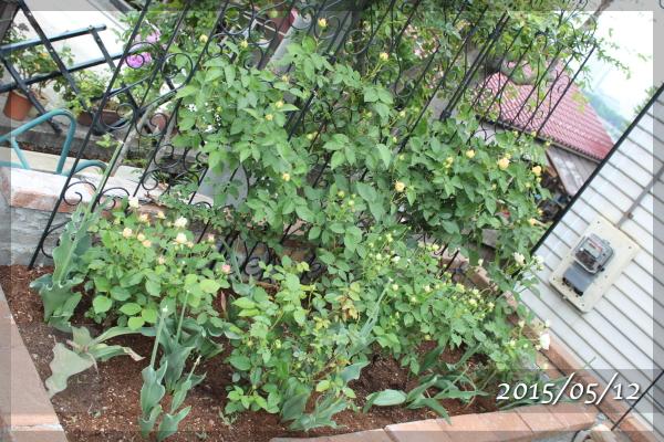 砕石駐車場花壇 エブリン グルスアンアーヘン ボレロ 20150512