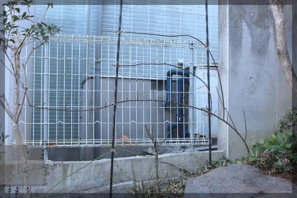 艶姿 ロックガーデン 20150107 剪定