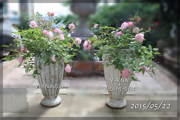 マルゴシスター 実験 Vicont064 V-RNA 20150522