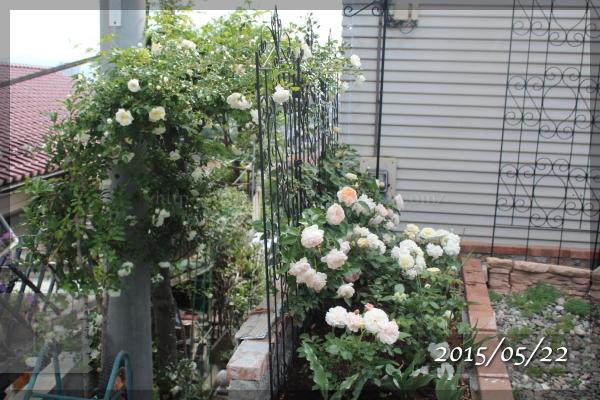 砕石駐車場花壇 アルベリックバルビエ エブリン グラスアンアーヘン ボレロ 20150522