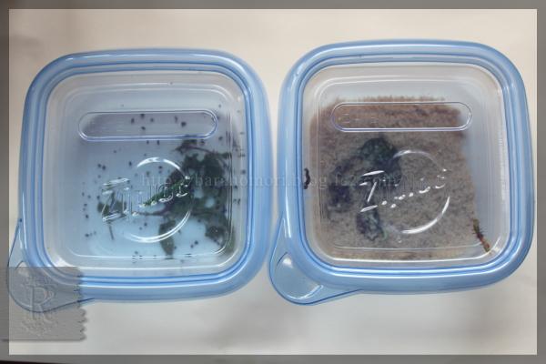 実験 米糠 米ぬか 幼虫駆除 20150420