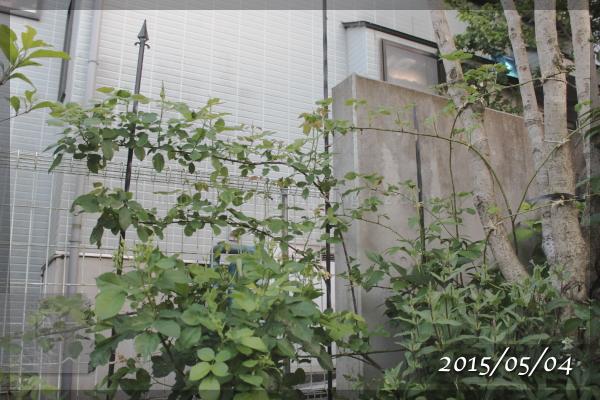 艶姿 20150505
