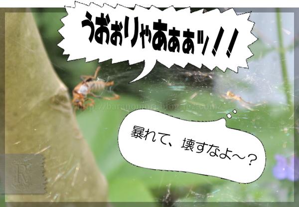 益虫 蜘蛛 クビボソジョウカイ 20150520