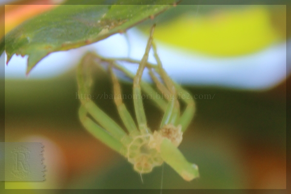 益虫 ハナグモ