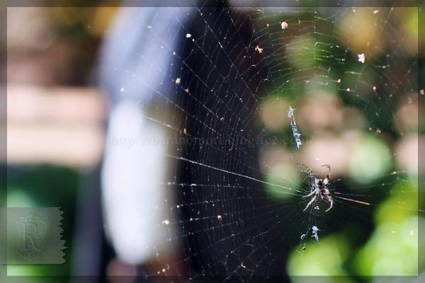 蜘蛛 クモ 益虫