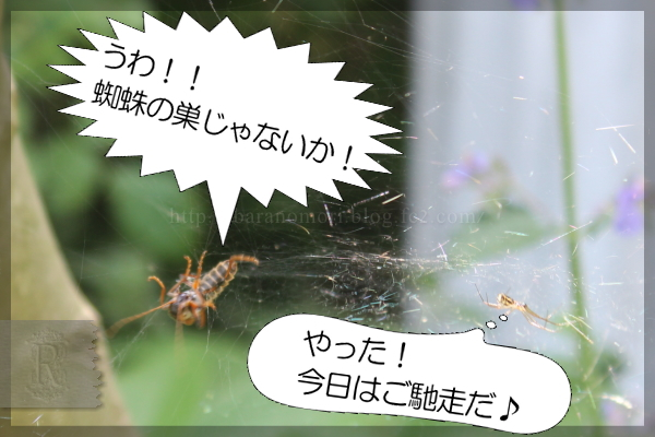 益虫 蜘蛛 クビボソジョウカイ