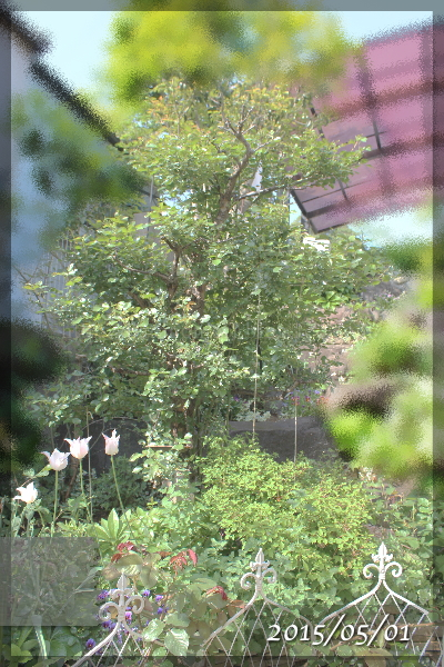 ホワイトメイディランド 20150501