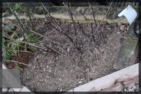 庭づくり 擁壁下 壁面手前 20150112