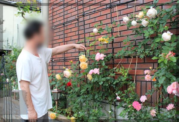 パパ花壇 東 20150523