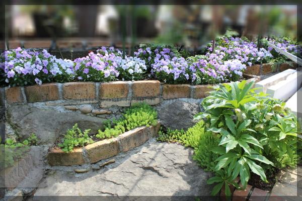表階段横 表階段脇 ビオラ 花壇 20150424