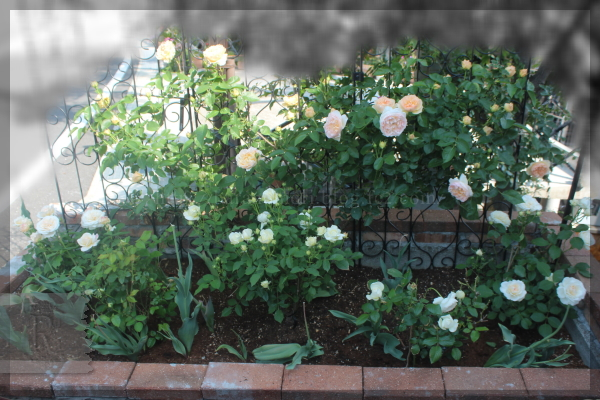 砕石駐車場花壇 エブリン グラスアンアーヘン ボレロ 20150515