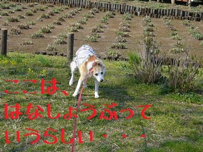 0414桜6