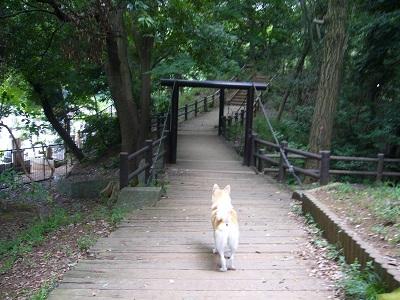 20150528里見公園2