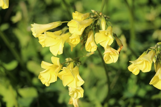 IMG_0992春の花