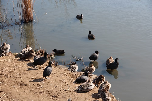 IMG_1314野鳥